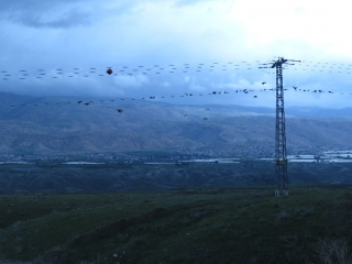 Birds on lines and view towards Jordan from Route 90