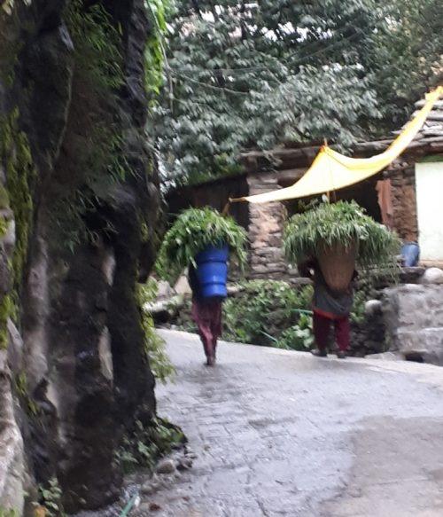 Men carrying winter greenery for fodder, Manali, Himachal Pradesh