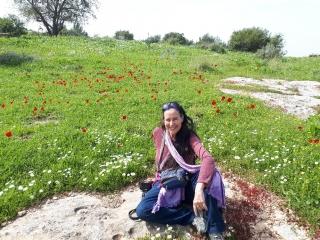 In the anemone field. Neot Kedumim