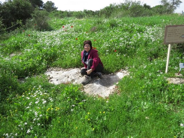 Ma'ayan in blooming meadow, Neot Kedumim
