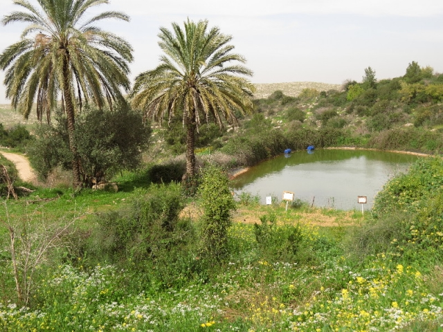Palms and pond at Neot Kedumim, Israel