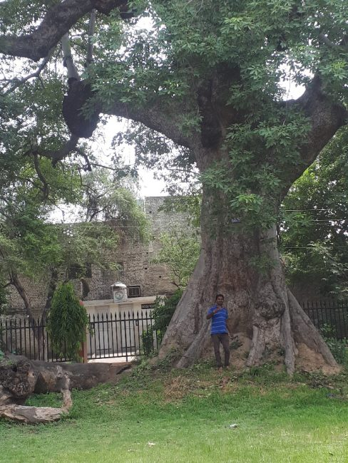 Arjun, my tuktuk driver, by huge ancient tree at historical museum garden