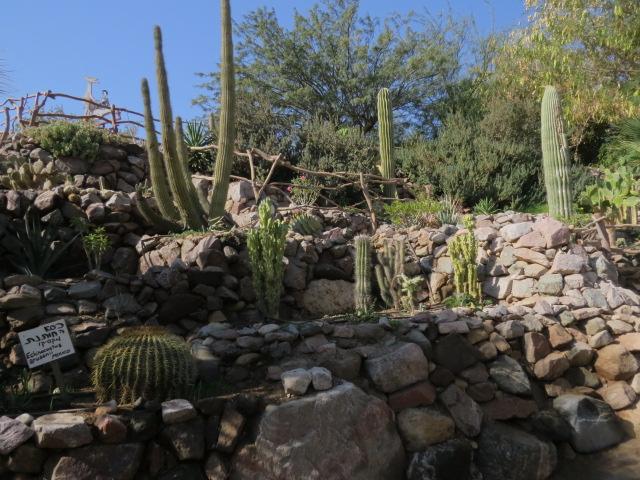 Cactus garden in Eilat's botanical garden