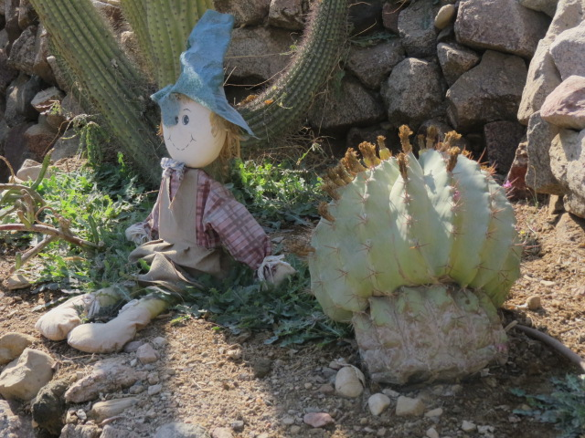 Cactus garden in Eilat's botanical garden with doll