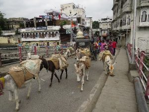 Donkeys on the other side of river, Udaipur, Rajasthan