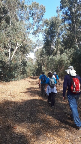Almagor hiking group in Hadera's eucalyptus forest, Sharon, Israel