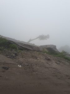 Tree in fog on the road from Manali to Leh, Himachal Pradesh