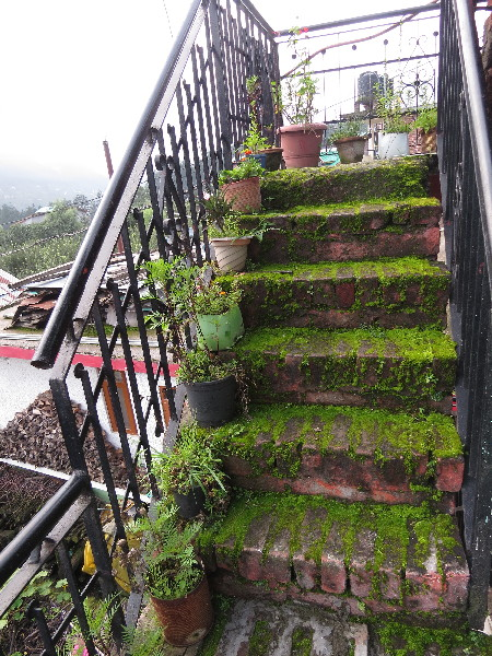 Staircase to heaven at Krishna's Guesthouse, Old Manali, Himachal Pradesh