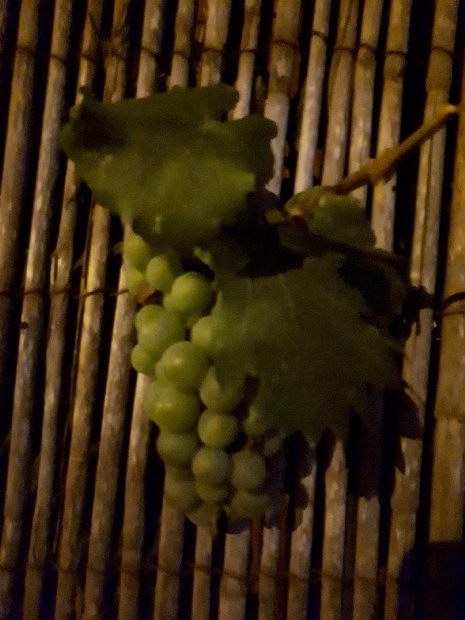 Kiryat yovel fene with grapes at night, Jerusalem