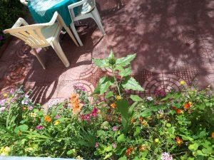 Peace guesthouse Leh, garden
