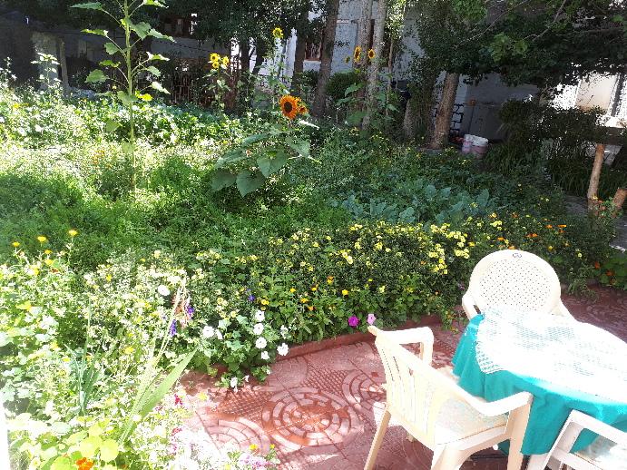 Peace Guesthouse Leh, garden,