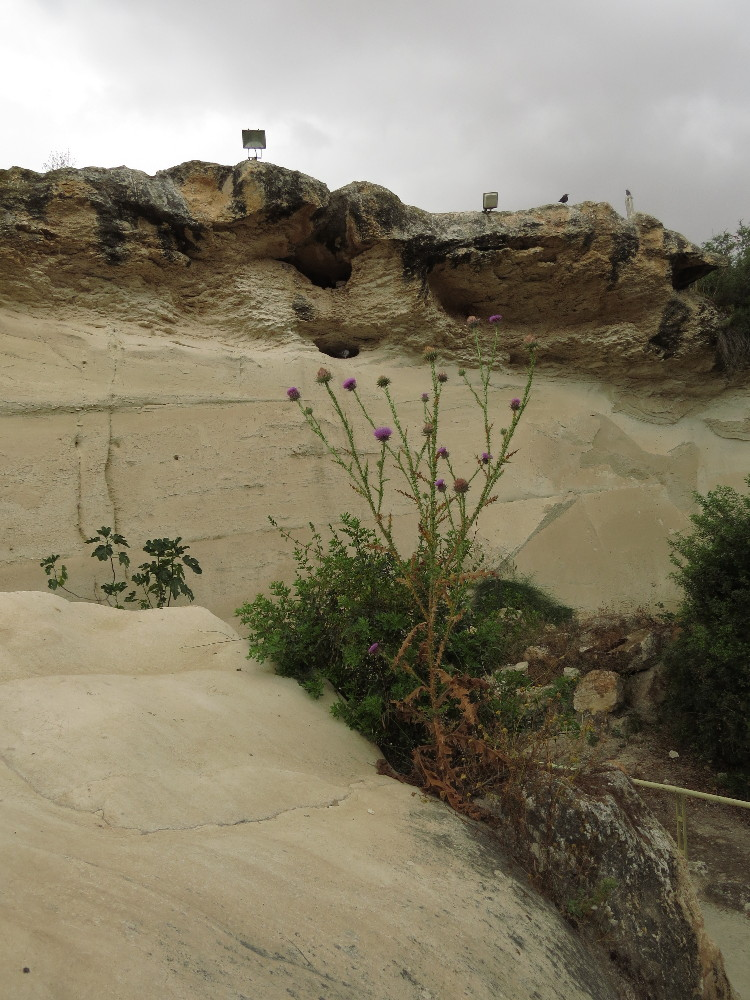 Chalk and plants at Beit Guvrin