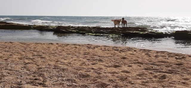 Dogs on sea ledge. Apollonia