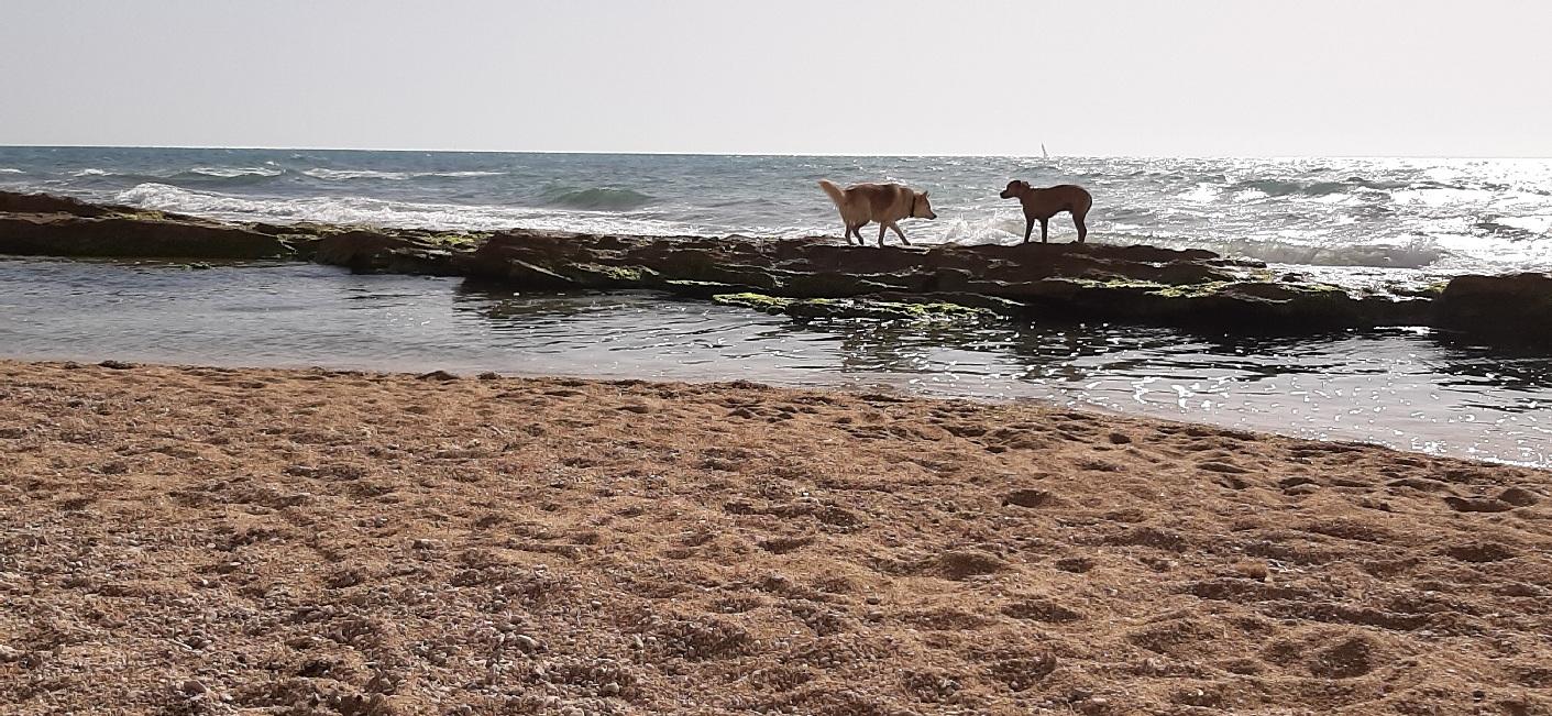 Dogs on sea ledge. Apollonia Beach