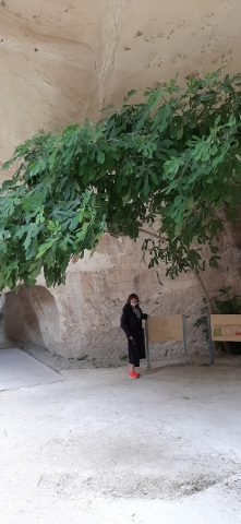 Judith in front of bell cave with fig. Beit Guvrin