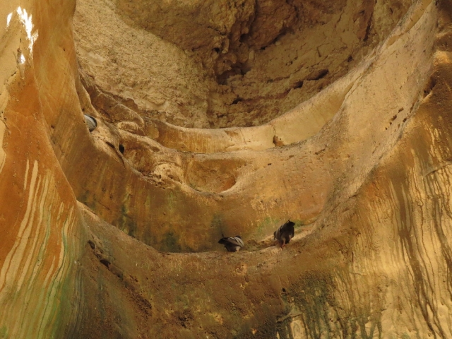 Doves at Polish cave. Beit Guvrin National park