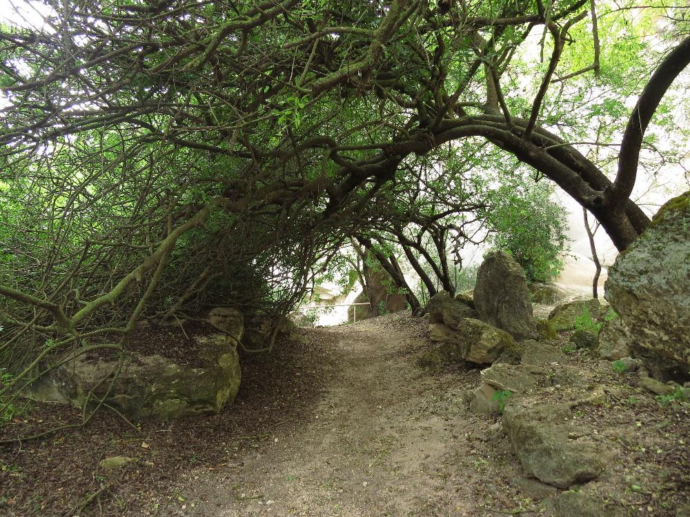 Romantic lane. Beit Guvrin National Park