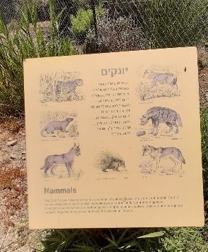 Board describing mammals at Einot Tzukim Nature Reerve