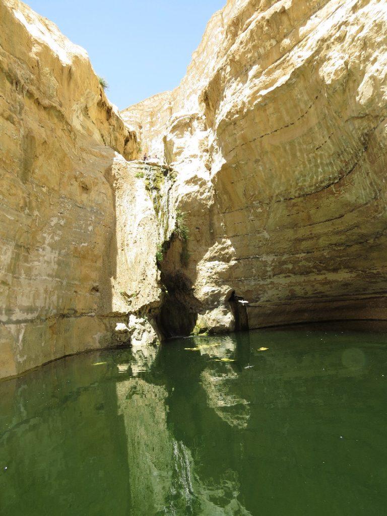 Ein Avdat National Park - the spring