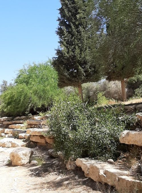Gardened entrance to Ben Gurion and Pola's tombs at Sde Boker