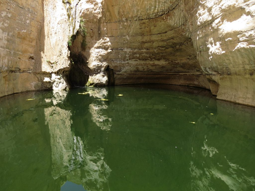 The spring at Ein Avdat National Park