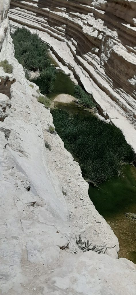 View of Ein Avdat spring from top
