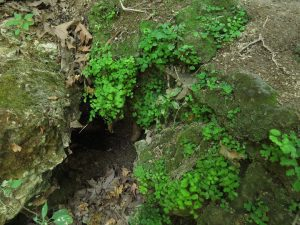 Magic niche with maidenhair fern. Snir Nature Reserve