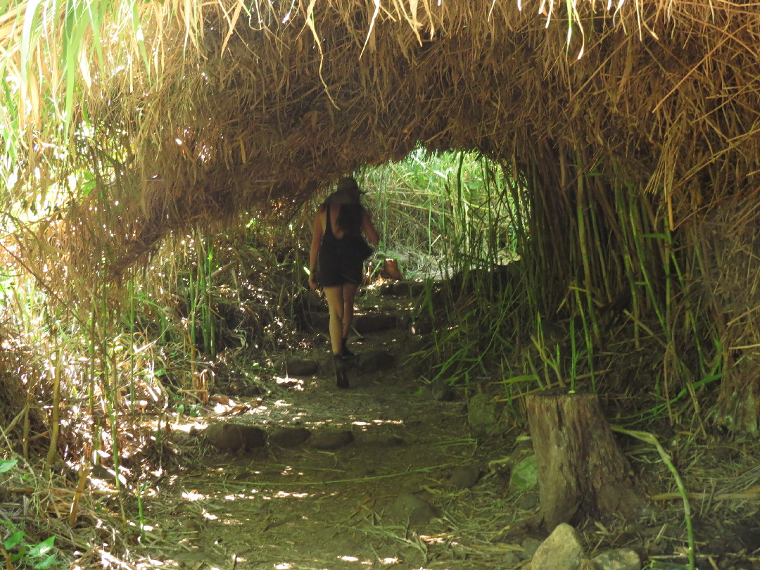Ela walking in a reed tunnel. Tel Dan Nature Reserve