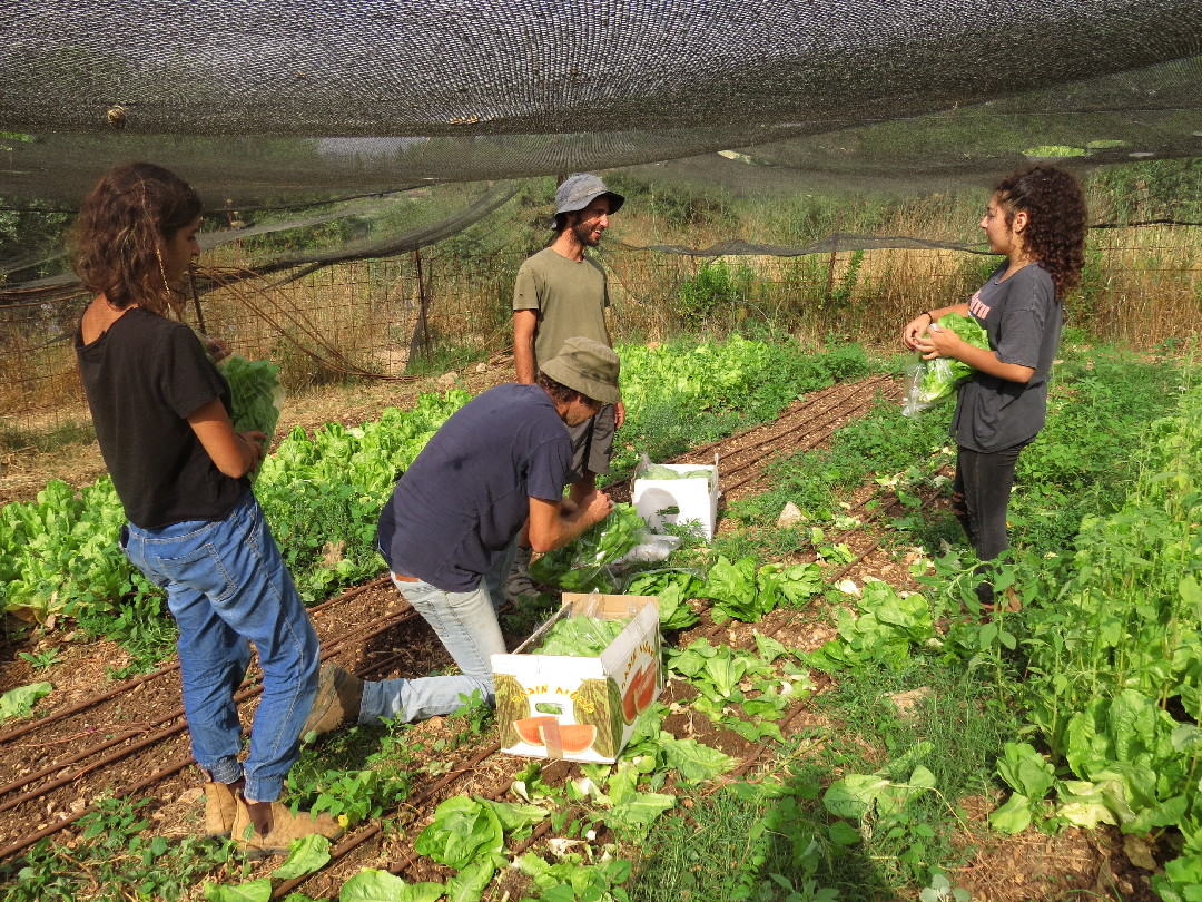 Working And Socializing In The Greenhouse. Kaima Organic Farm