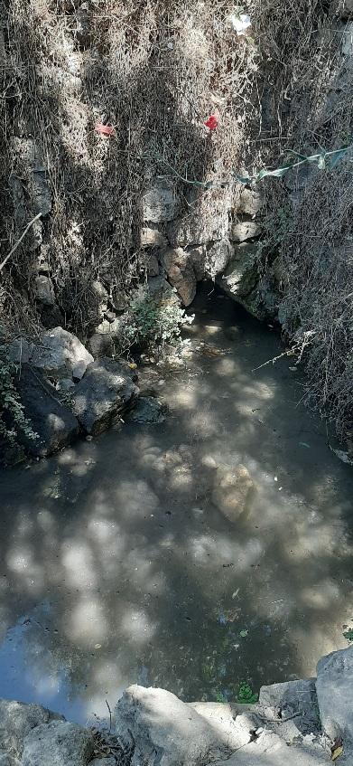 Pool at Ein Sapir Spring, Judean Hills