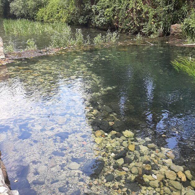 The Banias Stream
