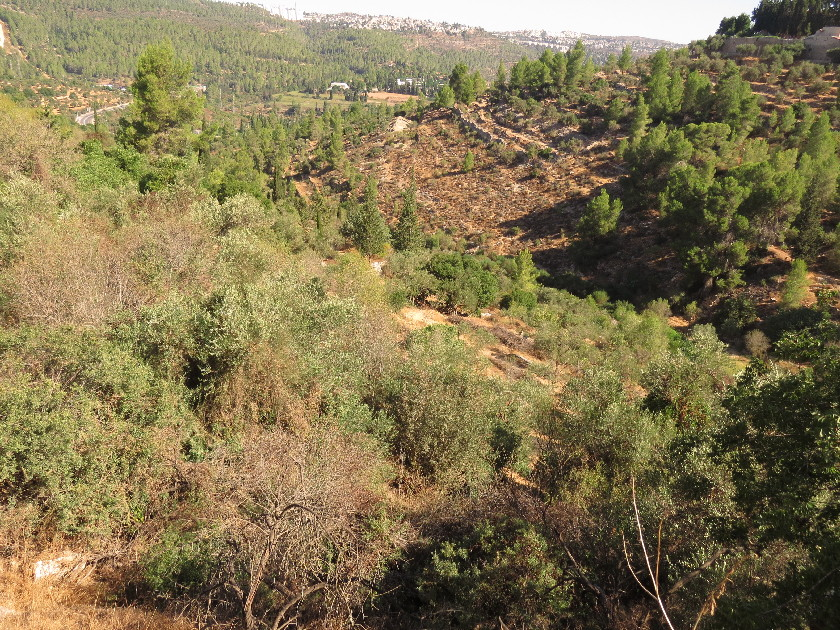 View from Madregot Habikur Rd., Ein Kerem
